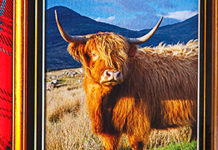 """WALKERS has added two new shortbread """"drums"""" to its portfolio. The products pay homage to two Scottish icons - the red deer stag and the Highland cow. The stag drum features the Monarch of the Glen painting by Sir Edward Landseer and contains chocolate chip shortbread."""