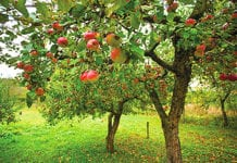Cider was one of the most successful drinks categories for many years but market and industry analyst Key Note found that 2012 was a much tougher year for the cider brands. The bright spot it reckons is fruit cider. The fruit cider products, which marry apples with berry and other fruit flavours, are showing significant growth.