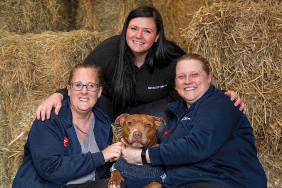 SPCA-rehoming-week
