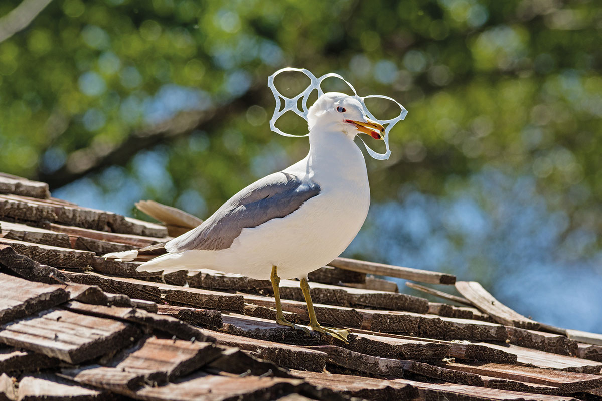 six-pack-plastic-bird