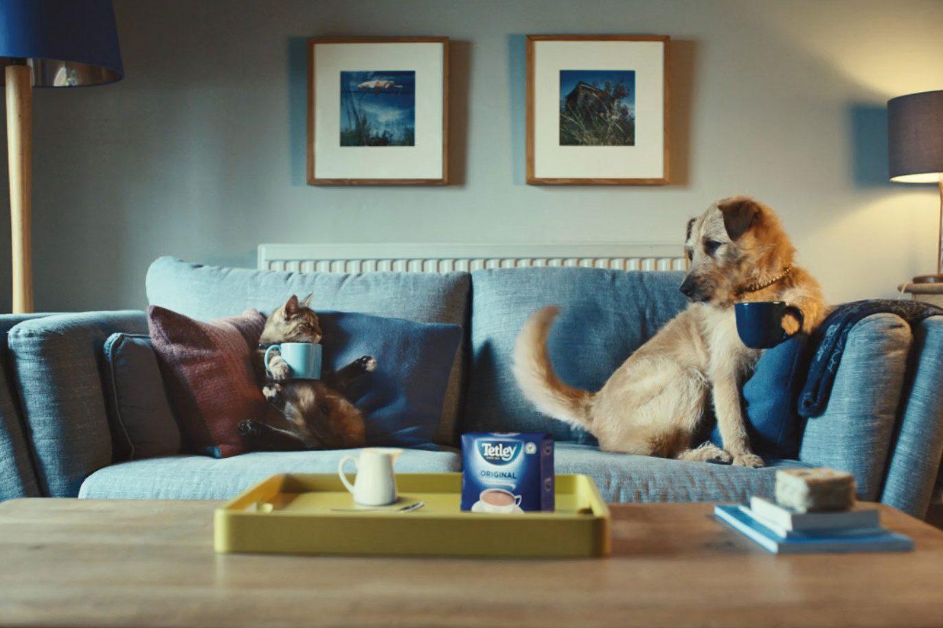 dog on sofa drinking tetley