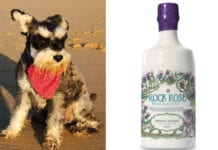 Rock Rose dog mascot