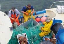 Fishermen catching crab