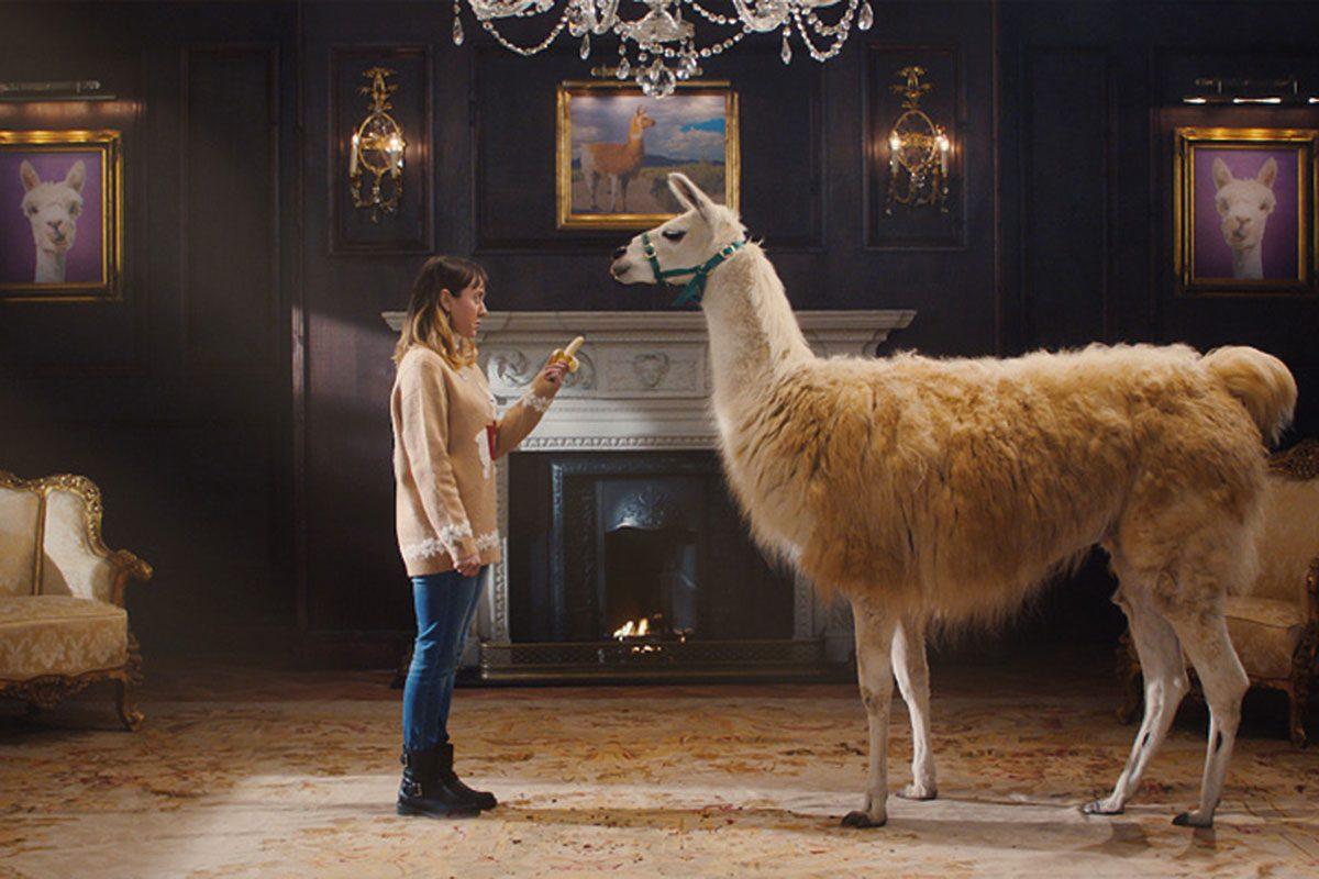 Vimto - Llama being offered a banana